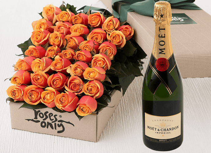 36 Cherry Brandy Roses Gift Box & Champagne