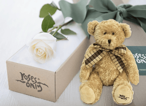 Single White Cream Rose Gift Box & Teddy Bear