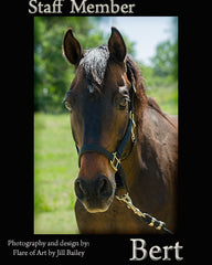 Colorado Therapy Horses | Meet the staff - Bert