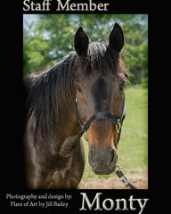 Colorado Therapy Horses | Meet the staff - Monty