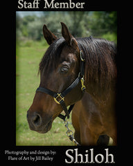 Colorado Therapy Horses | Meet the staff - Shiloh