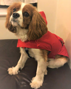 Fall Fashion Must-Haves For Your Dog - Red - The Color of The Season!