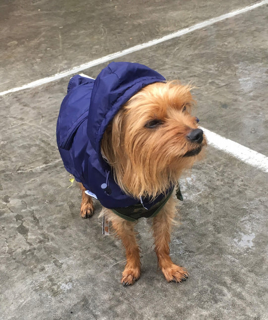 The Essential packable raincoat