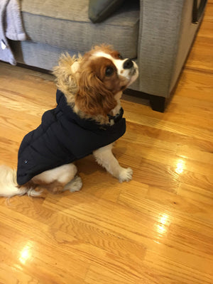 Doggie Trends Nyc Coat Navy Faux Fur Trim Dog Parka Winter Coat
