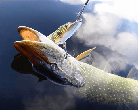 Image of Mighty Pike™ 8-Segment Lure