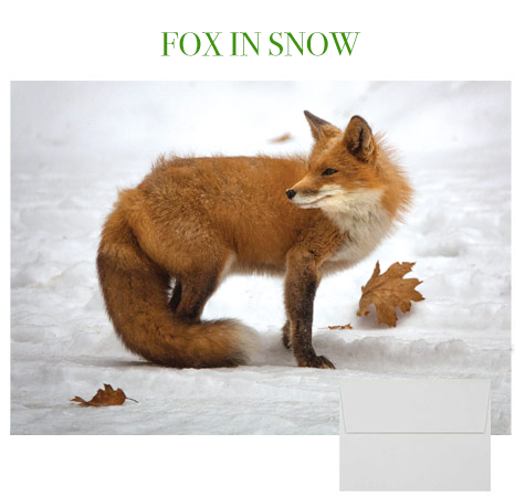 2019 Holiday Cards: Fox in Snow