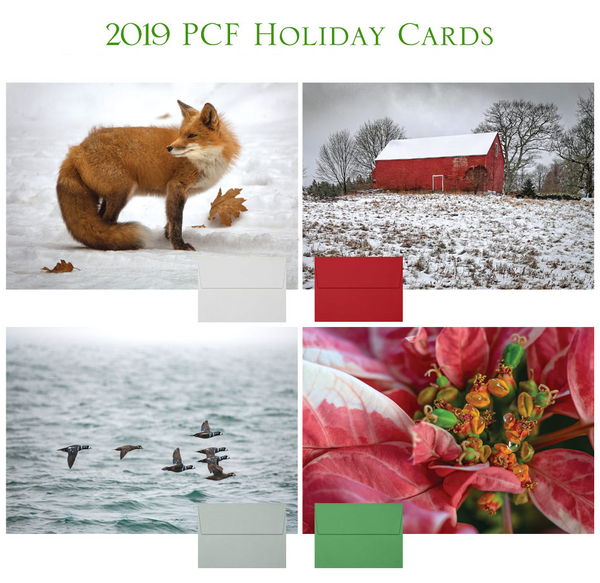 2019 Holiday Cards Combination Set