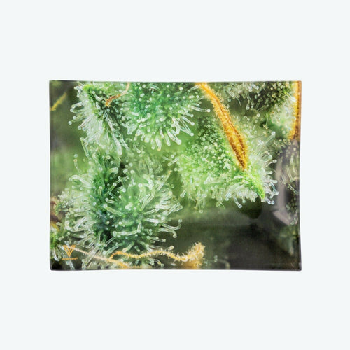 V-Syndicate - Glass Rolling Tray Tricomb Jungle