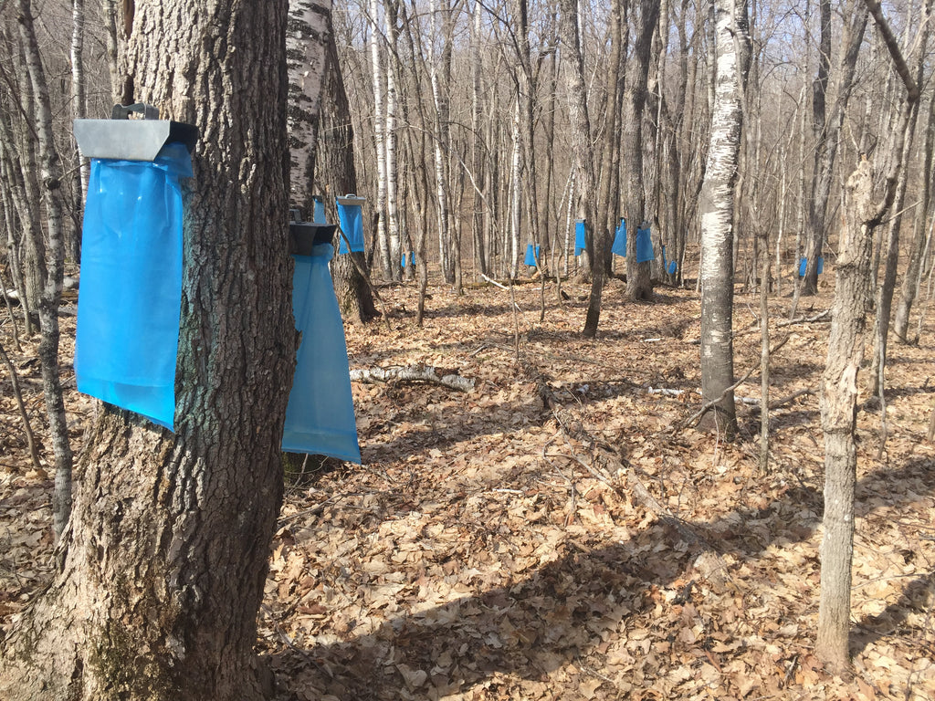 The History of the Sugar Bush
