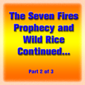 The Seven Fires Prophecy and Wild Rice Continued... (part 2 of 3)