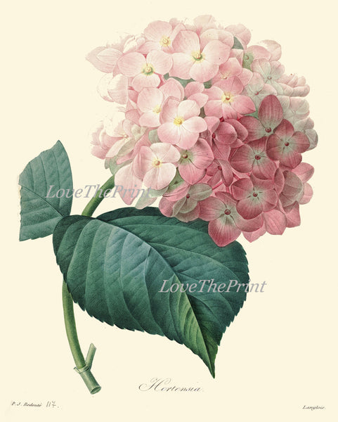 BOTANICAL Print SET of 4 Art  Antique Beautiful Hydrangea Flowers Plants Spring Summer Garden Nature Vintage Wall Home Decor to Frame
