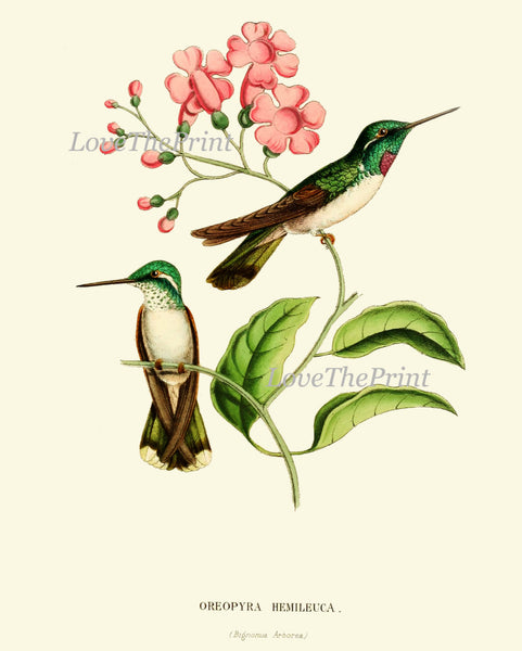 Hummingbird Print SET of 9 Art Beautiful Antique Humminbirds Birds Tropical Pink Flowers Botanical Garden Illustration Decor to Frame