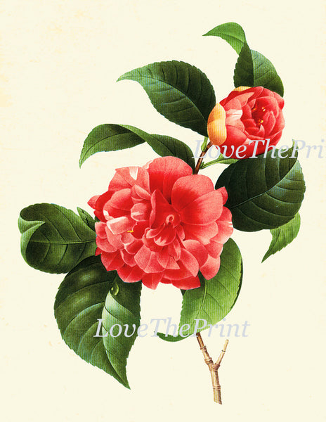 Botanical Print Set of 16 Art  Redoute Antique Beautiful Flowers Red Camellia Rose Passion Nasturtium Peony Hibiscus Dahlia Wall Decor