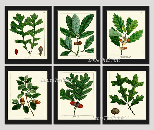 Botanical Print Set of 6 Art  Redoute Antique Beautiful Acorn Tree Branch Green Leaf Nuts Forest Tree Nature Home Room Wall Decor