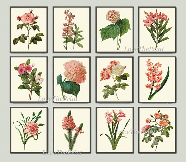 Botanical Print Set of 12 Art  Redoute Antique Beautiful Flowers Pink Coral Hydrangea Lily Iris Periwinkle Gladiolus Home Wall Decor