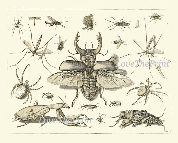Botanical Print Set of 9 Art  Beautiful Antique Dragonfly Butterfly Beetle Moth Spider Spring Summer Garden Insects Home Wall Decor