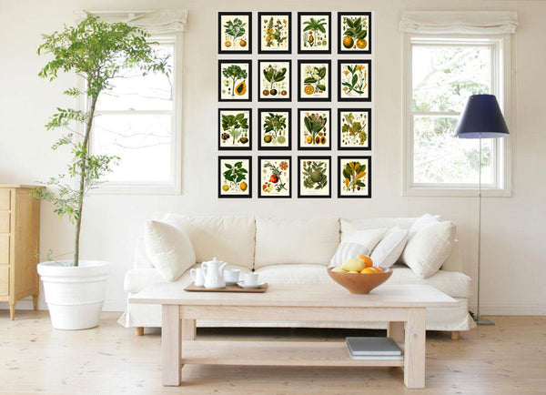 Botanical Print Set of 16 Art  Antique Beautiful Lemon Pomegranate Orange Tropical Fruit Tree Spices Flowers Home Room Wall Decor KOH