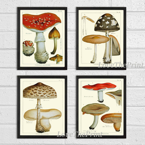 Mushroom Print Set of 4 Art  Antique Beautiful Botanical Red Brown Mushrooms Forest Nature Chart Kitchen Dining Home Room Wall Decor