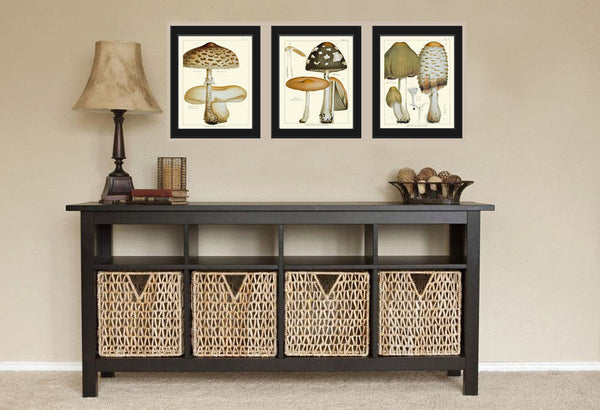 Mushroom Print Set of 3 Art  Antique Beautiful Botanical Beige Brown Fungi Mushrooms Chart Cooking Kitchen Dining Home Room Wall Decor