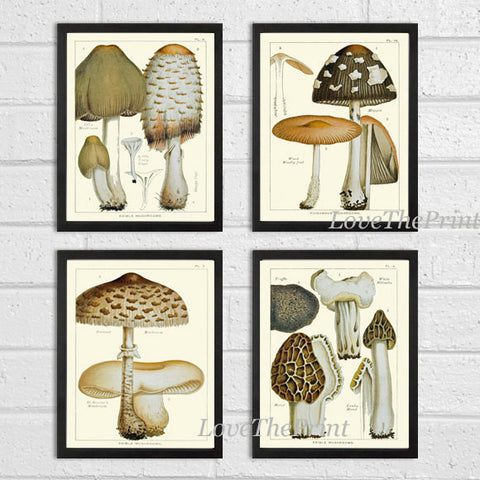 Mushroom Print Set of 3 Art  Antique Beautiful Botanical Beige Brown Fungi Mushrooms Truffle Cooking Kitchen Dining Home Room Wall Decor