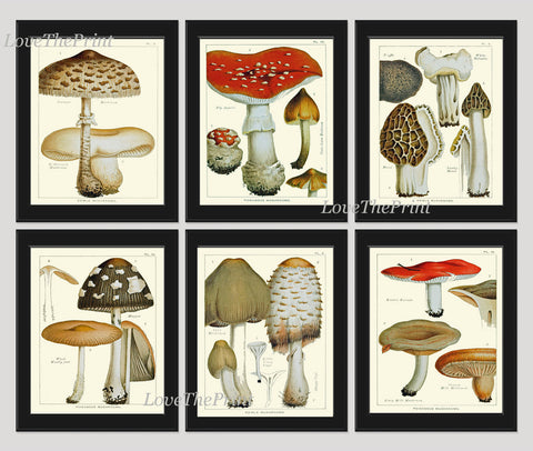 Mushroom Print Set of 6 Art  Antique Beautiful Red Beige Brown Fungi Mushrooms Truffle Food Cooking Kitchen Dining Home Room Wall Decor