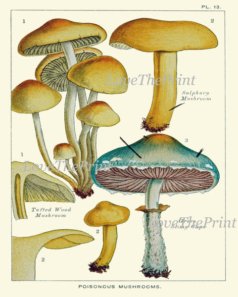 Mushroom Print Set of 3 Art  Antique Beautiful Aqua Beige Fungi Mushrooms Forest Nature Food Cooking Kitchen Dining Home Room Wall Decor