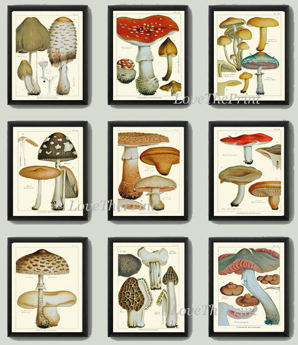 Mushroom Print Set of 9 Art  Antique Beautiful Red Aqua Brown Fungi Mushrooms Truffle Food Cooking Kitchen Dining Home Room Wall Decor