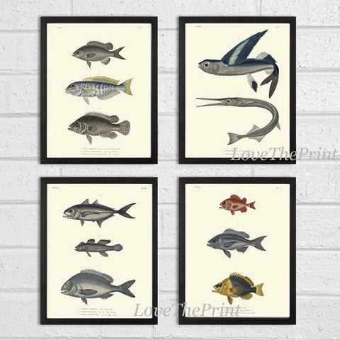 Fish Print Set of 4 Art  Beautiful Antique Fish Illustration Chart Natural Science Sea Lake Ocean Marine Home Room Wall Decor to Frame