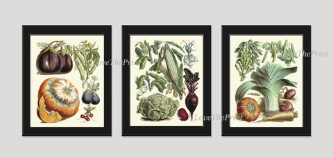 Botanical Vegetable Print Set of 3 Art  Redoute Antique Beautiful Eggplant Pumpkin Cabbage Corn Beets Kitchen Dining Room Wall Decor