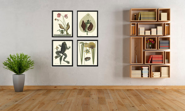 Frog Print Set of 4 Art  Beautiful Antique Frogs Amphibian Tropical Flowers Lake River Nature Home Room Illustration Wall Decor to Frame