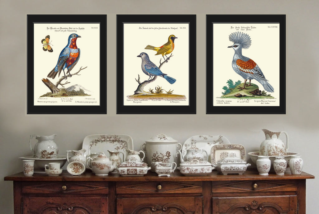 Bird Print Set of 3 Art  Antique Beautiful Blue Red Birds Butterfly Tree Branch Green Leaves Nature Book Plate Home Room Wall Decor