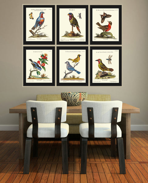Bird Print Set of 6 Art  Antique Beautiful Blue Red Yellow Birds Book Plate Picture Illustration Colorful Bedrom  Home Room Wall Decor