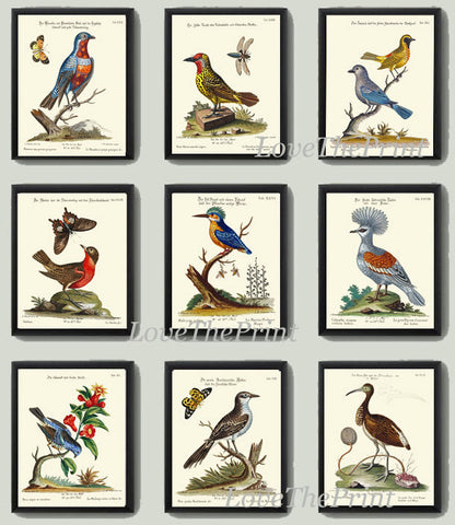 Bird Print Set of 9 Art  Antique Beautiful Blue Red Birds Butterfly Green Forest Tree Graden Lake Nature Chart Home Room Wall Decor