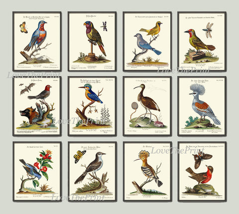 Bird Print Set of 12 Art  Antique Beautiful Blue Red Birds Green Forest Garden Tree Nature Bird Watching  Chart Home Room Wall Decor