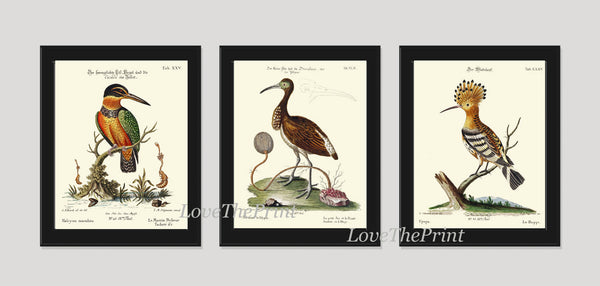 Bird Print Set of 3 Art  Antique Beautiful Blue Red Birds Kingfisher Ibis Nature Book Plate Dining Living Home Room Office Wall Decor