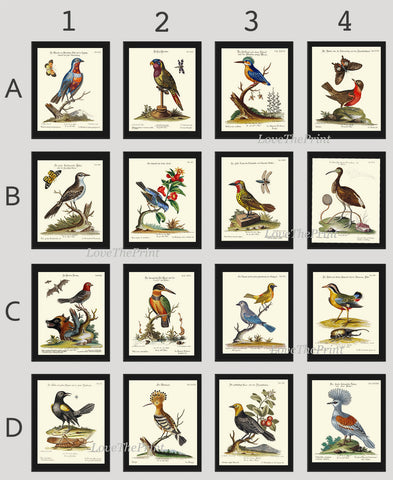 Bird Print Set of 16 Art  Antique Beautiful Blue Red Birds Green Forest Garden Tree Nature Bird Watching  Chart Home Room Wall Decor