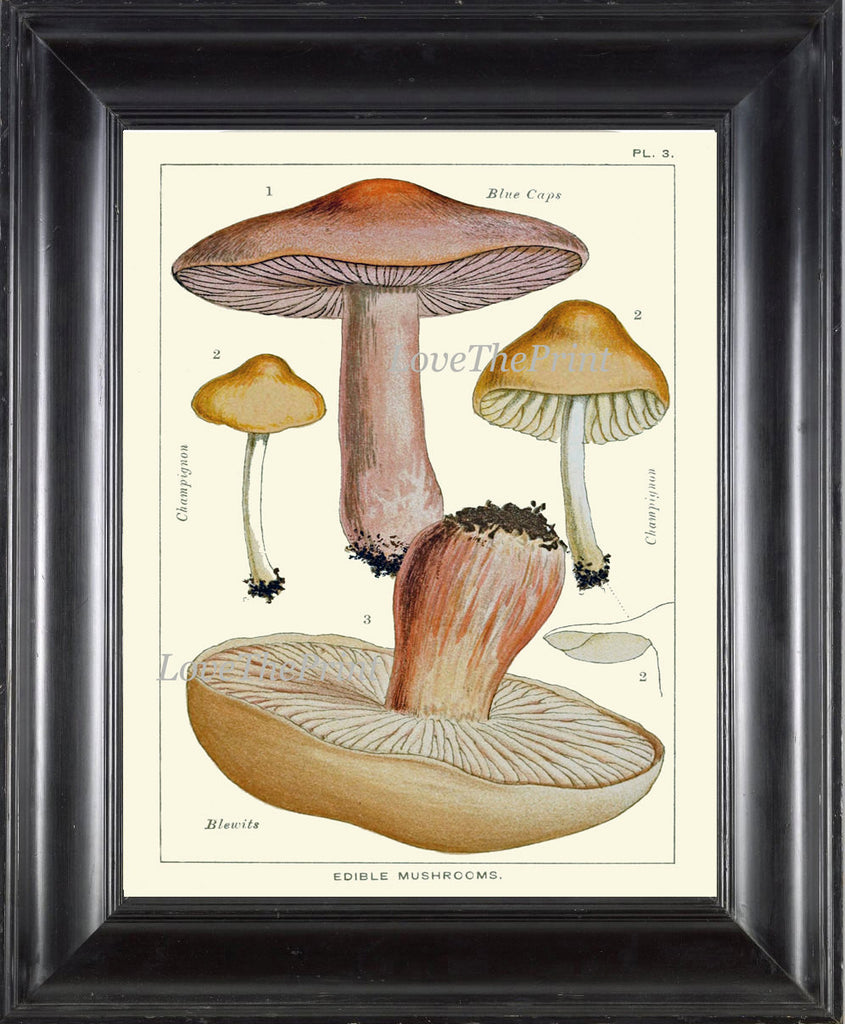 Mushroom Art Print 3 Antique Beautiful Beige Large Fungi Mushrooms Forest Nature Chart Food Cooking Chef Kitchen Dining Home Room Wall Decor