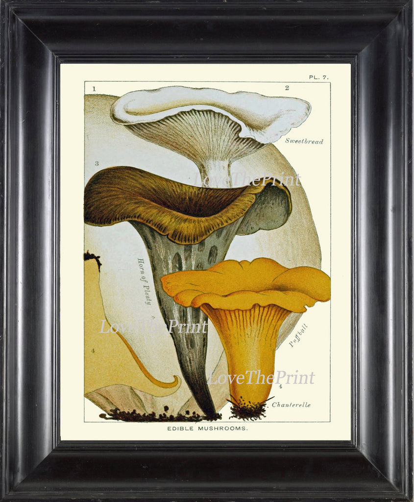 Mushroom Art Print 7 Antique Beautiful Beige Large Fungi Mushrooms Forest Nature Chart Food Cooking Chef Kitchen Dining Home Room Wall Decor