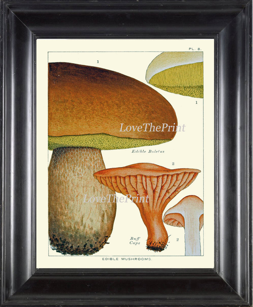 Mushroom Art Print 8 Antique Beautiful Beige Large Fungi Mushrooms Forest Nature Chart Food Cooking Chef Kitchen Dining Home Room Wall Decor