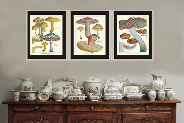 Mushroom Art Print 12 Antique Beautiful Green Forest Aqua Fungi Mushrooms Kitchen Dining Colorful Illustration Summer Home Room Wall Decor