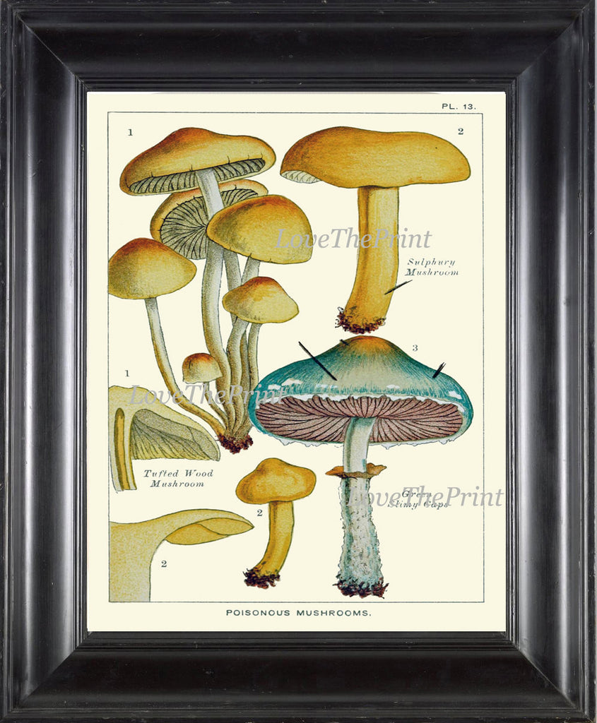 Mushroom Art Print 13 Antique Beautiful Green Forest Aqua Fungi Mushrooms Kitchen Dining Colorful Illustration Summer Home Room Wall Decor