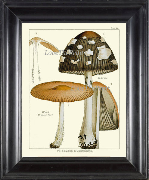 Mushroom Art Print 14 Antique Beautiful Green Forest Fungi Mushrooms Polka Dot Kitchen Dining Illustration Home Room Wall Decor to Frame