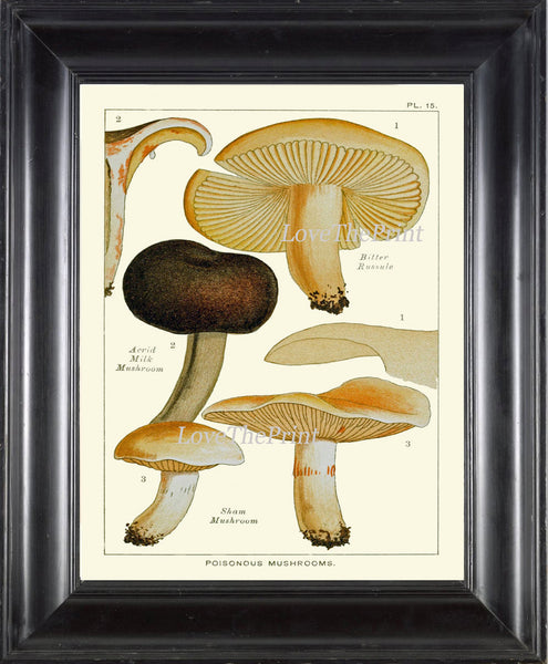 Mushroom Art Print 15 Antique Beautiful Green Forest Fungi Mushrooms Kitchen Dining Living Office Illustration Home Room Wall Decor to Frame