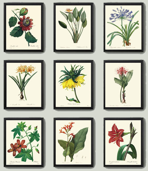Botanical Tropical Flower Art Print SET of 9 Art  Redoute Antique Living Dining Room Bedroom Kitchen Hallway Home Wall Decor to Frame