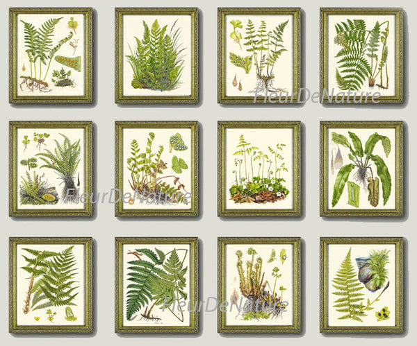 Antique Fern Lindman  Botanical Art Print 3 Antique Beautiful Green Ferns Forest Nature Natural Science to Frame Home Room Wall Decor