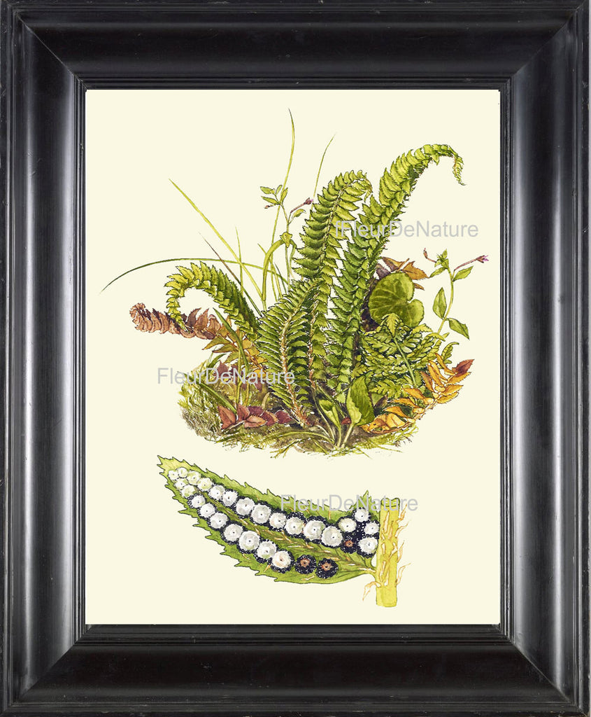 Antique Fern Art Print 17 Lindman Botanical Antique Beautiful Green ...