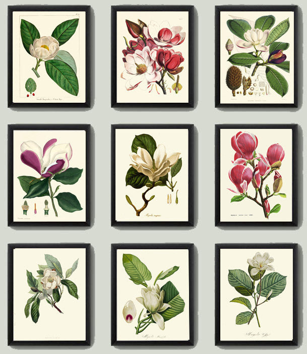 Magnolia Botanical Print Set of 9 Art  Antique Beautiful Pink White Large Flowers Sprint Summer Tree Garden Home Wall Decor to Frame