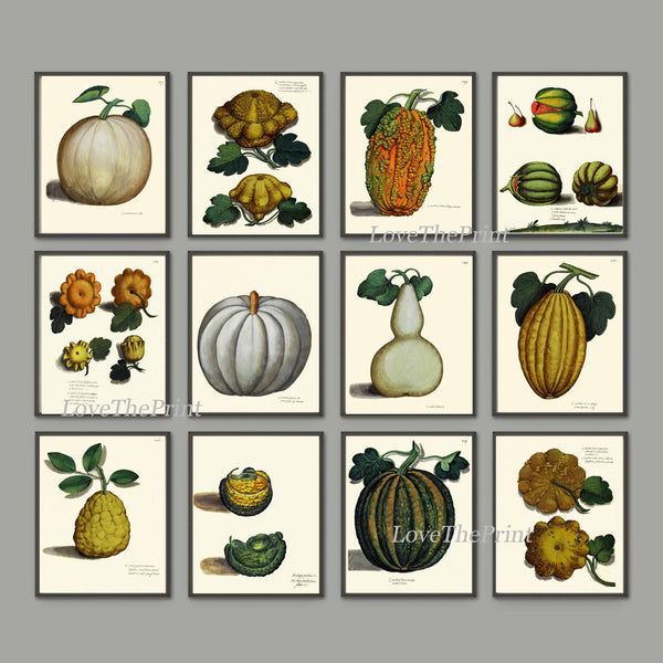 Pumpkin Print Set of 12 Art Prints Beautiful Antique Botanical Illustration Orange Green White Gourd Squash Fall Garden Wall Home Decor ALD