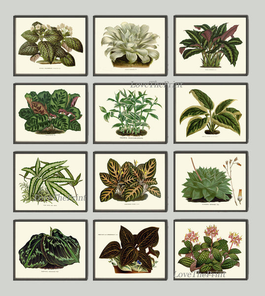 Vintage Green Plant Art Print Set of 12 Beautiful Botanical Antique Illustration Home Green Wall Decor Plant Leaf Flowers Large Poster Chart