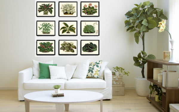 Antique Green Plant Botanical Art Print Set of 9 Beautiful Green Leaf Illustration Home Wall Decor Plant Leaf Flowers Large Poster Chart